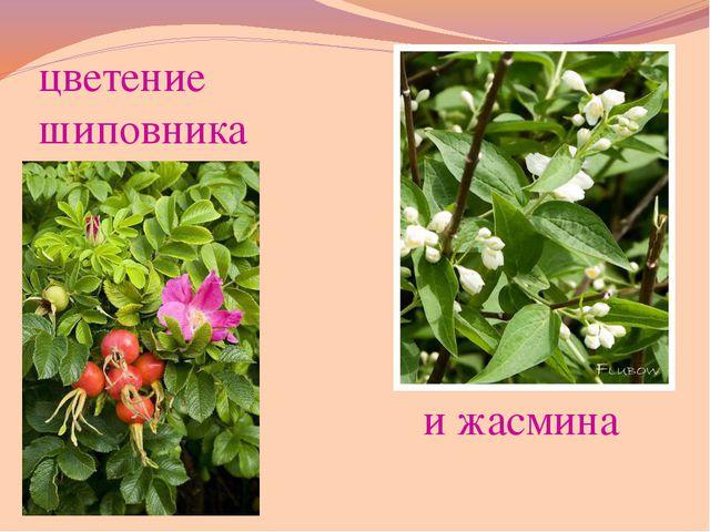корни ствол стебель листья листья ветки цветы