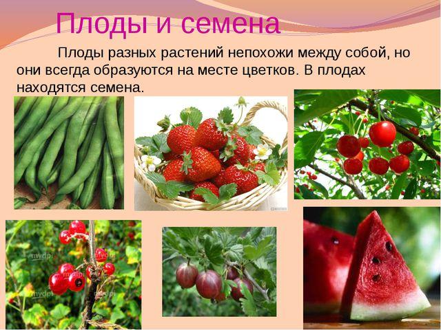 Плоды очень разнообразны по форме и величине.