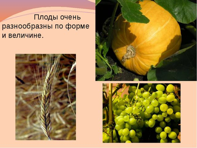 корни ствол стебель листья листья ветки цветы плоды