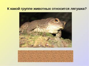 К какой группе животных относится лягушка? земноводные