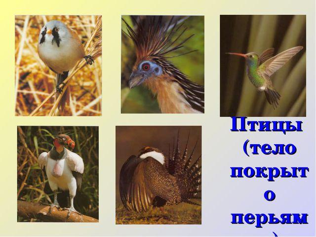 Птицы (тело покрыто перьями)