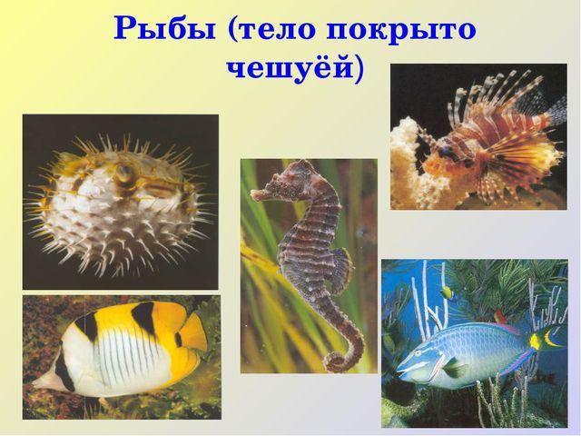 Рыбы (тело покрыто чешуёй)