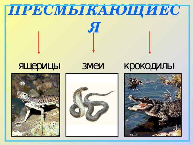 ПРЕСМЫКАЮЩИЕСЯ ящерицы змеи крокодилы