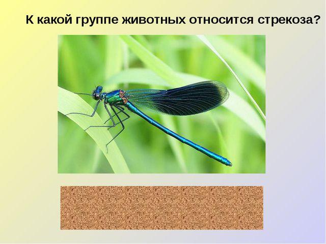 К какой группе животных относится стрекоза? насекомые