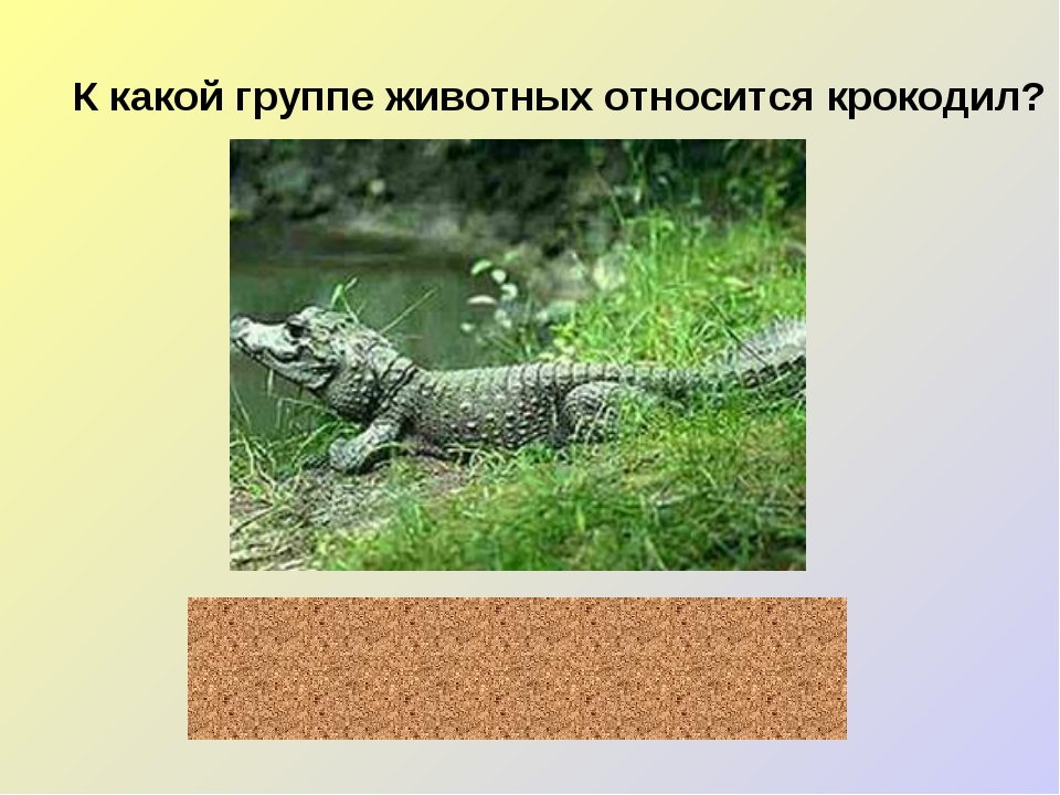 К какой группе животных относится крокодил? пресмыкающиеся