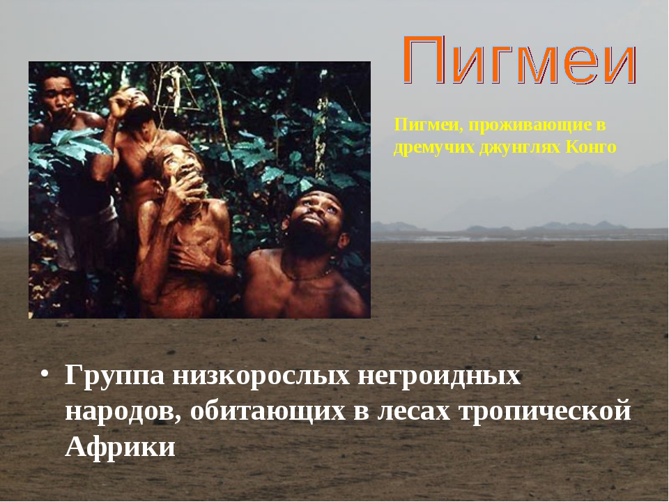 Группа низкорослых негроидных народов, обитающих в лесах тропической Африки П...