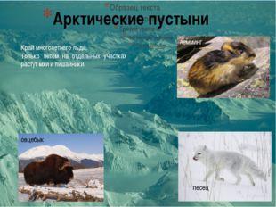 Арктические пустыни песец лемминг овцебык Край многолетнего льда. Только лето