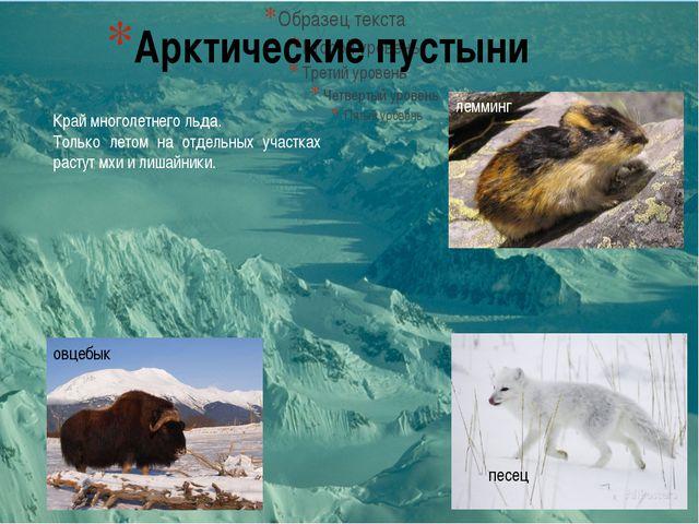 Арктические пустыни песец лемминг овцебык Край многолетнего льда. Только лето...