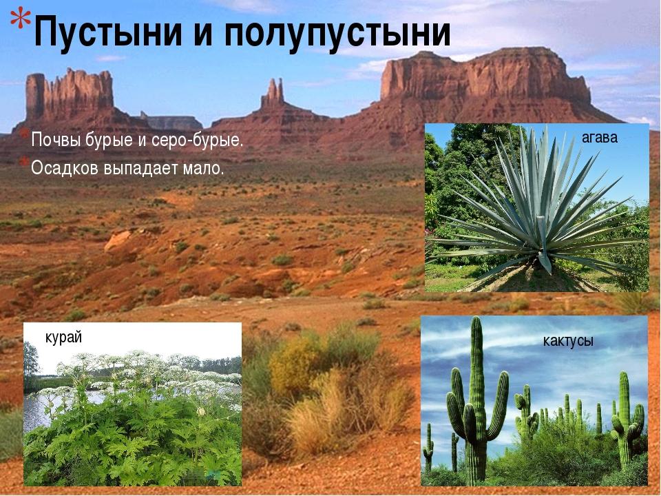 Пустыни и полупустыни Почвы бурые и серо-бурые. Осадков выпадает мало. агава...