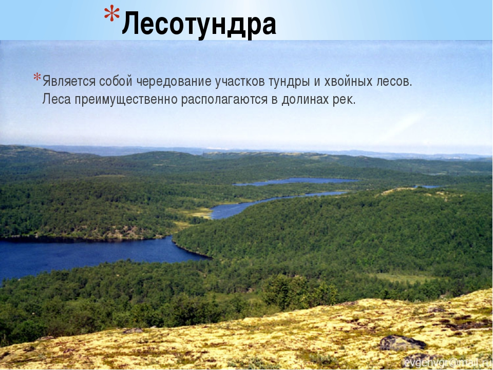 Лесотундра Является собой чередование участков тундры и хвойных лесов. Леса п...