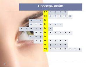 Проверь себя: 1А к с о н  2н е й р о н д у г 3а р е ф 4л е к с д е н д р 5и