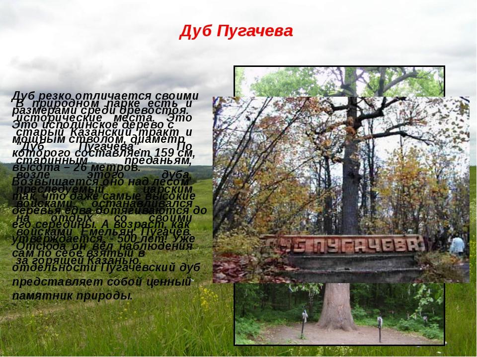 """В природном парке есть и исторические места. Это старый Казанский тракт и """"Ду..."""