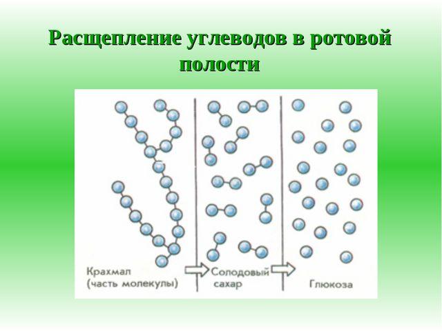Расщепление углеводов в ротовой полости