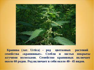 Крапива (лат. Urtica) – род цветковых растений семейства «крапивные». Стебли