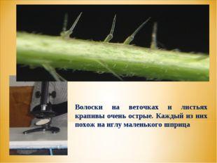 Волоски на веточках и листьях крапивы очень острые. Каждый из них похож на иг
