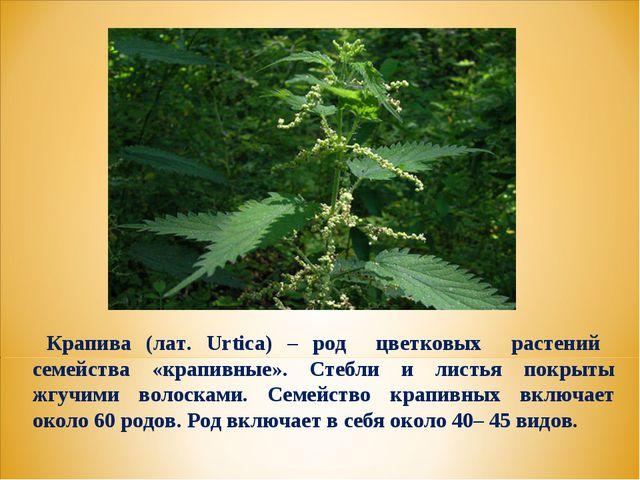 Крапива (лат. Urtica) – род цветковых растений семейства «крапивные». Стебли...