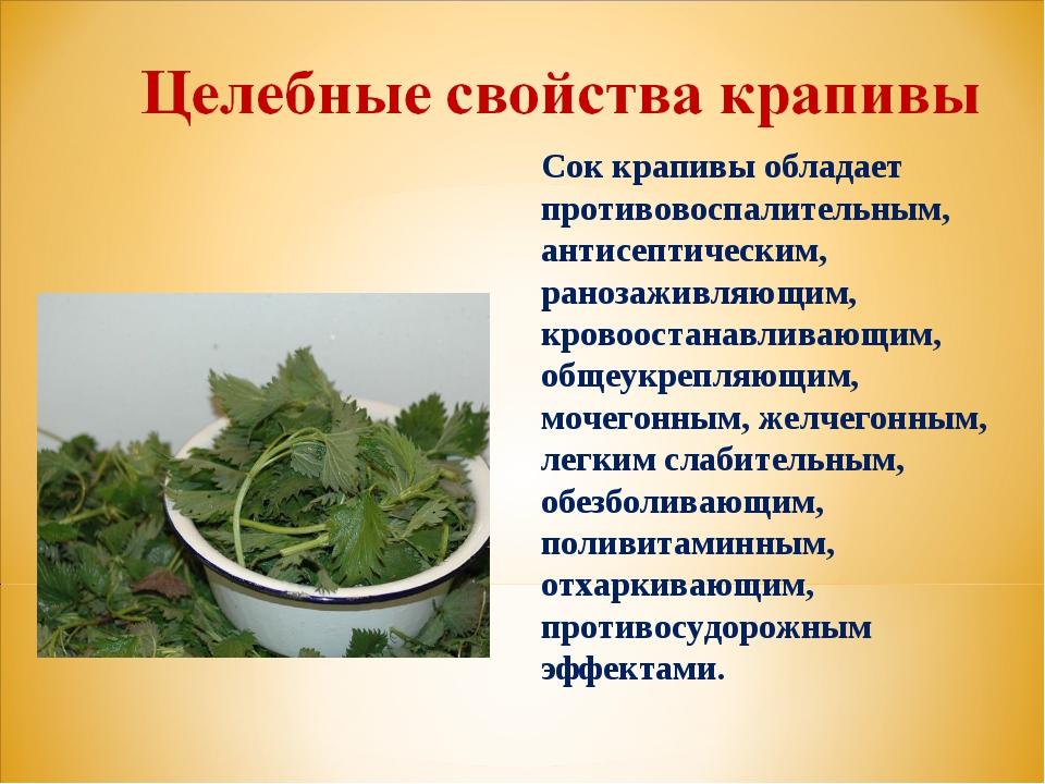 Сок крапивы обладает противовоспалительным, антисептическим, ранозаживляющим,...