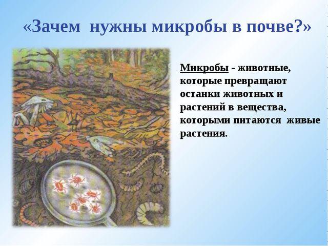 «Зачем нужны микробы в почве?» Микробы - животные, которые превращают останки...