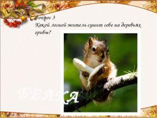 Вопрос 3 Какой лесной житель сушит себе на деревьях грибы? БЕЛКА