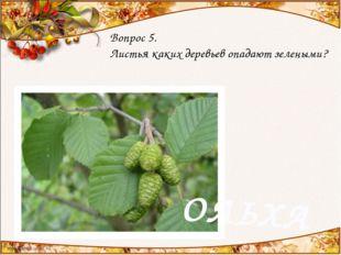 Вопрос 5. Листья каких деревьев опадают зелеными? ОЛЬХА