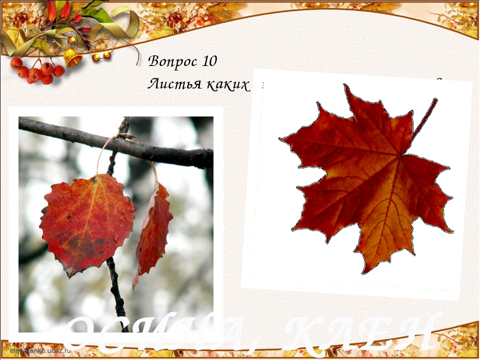 Вопрос 10 Листья каких деревьев осенью краснеют? ОСИНА, КЛЕН