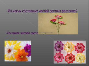 - Из каких составных частей состоит растение? -Из каких частей состоит цветок?