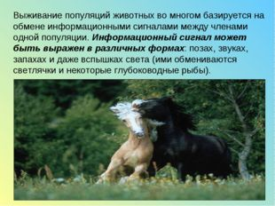 Выживание популяций животных во многом базируется на обмене информационными с