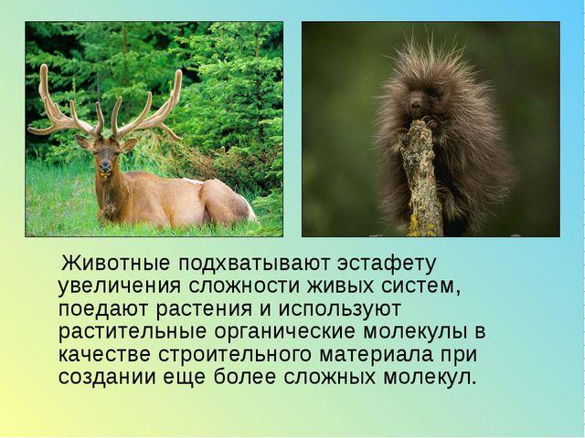 Животные подхватывают эстафету увеличения сложности живых систем, поедают ра...