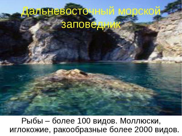 * Дальневосточный морской заповедник Рыбы – более 100 видов. Моллюски, иглоко...