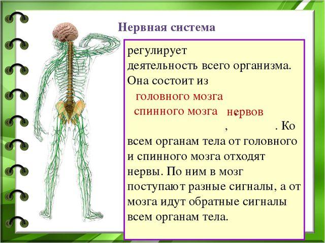 регулирует деятельность всего организма. Она состоит из , , . Ко всем органам...