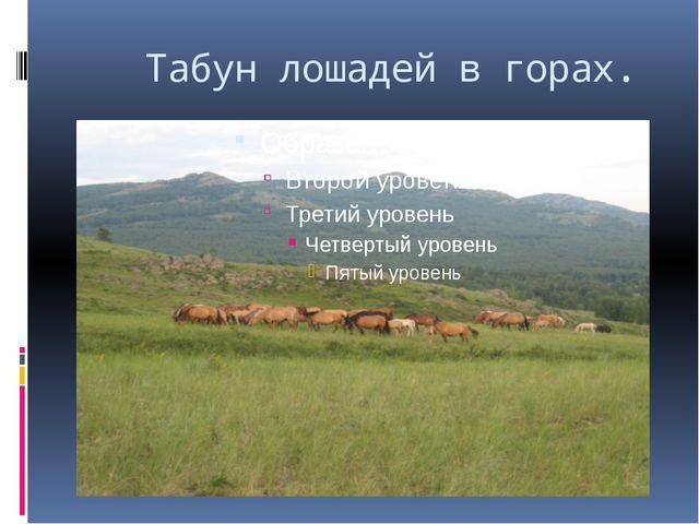 Табун лошадей в горах.