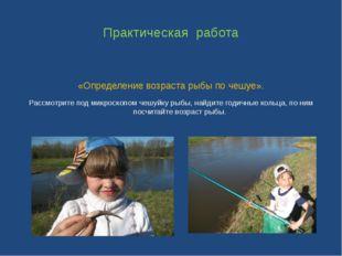 Практическая работа «Определение возраста рыбы по чешуе». Рассмотрите под мик
