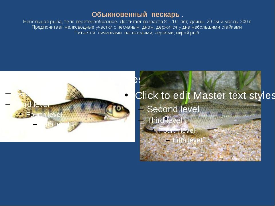 Обыкновенный пескарь . Небольшая рыба, тело веретенообразное. Достигает возра...