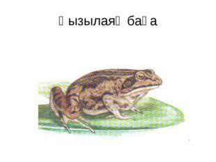 Қызылаяқ бақа