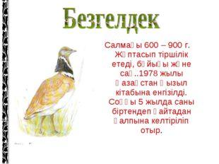 Салмағы 600 – 900 г. Жұптасып тіршілік етеді, бұйығы және сақ..1978 жылы Қаза