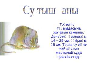 Тоқалтіс тұқымдасына жататын кеміргіш. Денесінің ұзындығы 14 – 25 см, құйрығы
