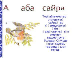 Торғайтектестер отрядының сайрақтар тұқымдасының өкілі. Қазақстанның көп жері