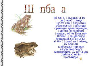 Ірі бақа, ұзындығы 10 см.Қазақстанда Солтүстік Қазақстан облысының қайынды ор