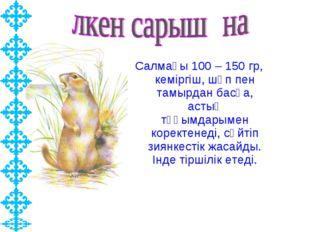 Салмағы 100 – 150 гр, кеміргіш, шөп пен тамырдан басқа, астық тұқымдарымен ко