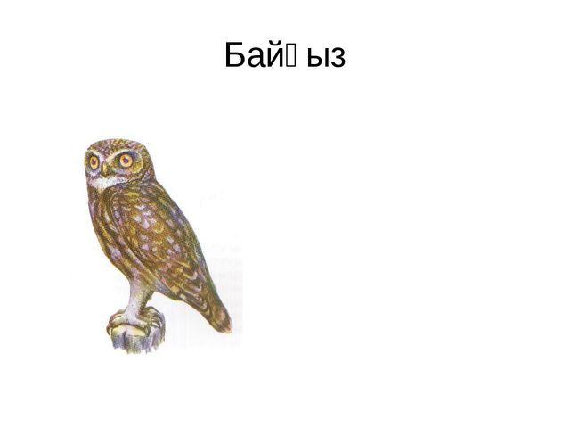 Байғыз