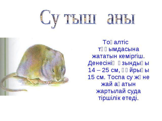 Тоқалтіс тұқымдасына жататын кеміргіш. Денесінің ұзындығы 14 – 25 см, құйрығы...