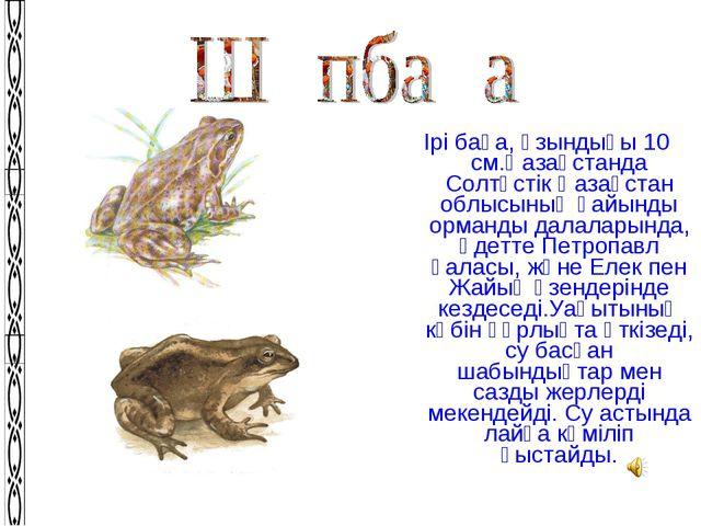 Ірі бақа, ұзындығы 10 см.Қазақстанда Солтүстік Қазақстан облысының қайынды ор...