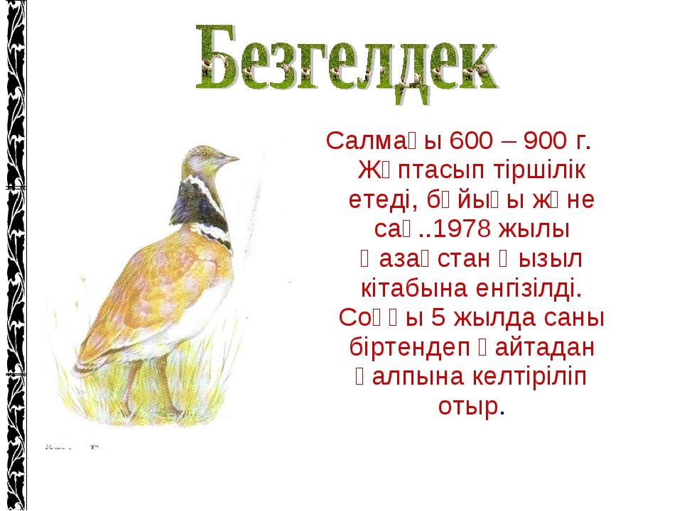Салмағы 600 – 900 г. Жұптасып тіршілік етеді, бұйығы және сақ..1978 жылы Қаза...