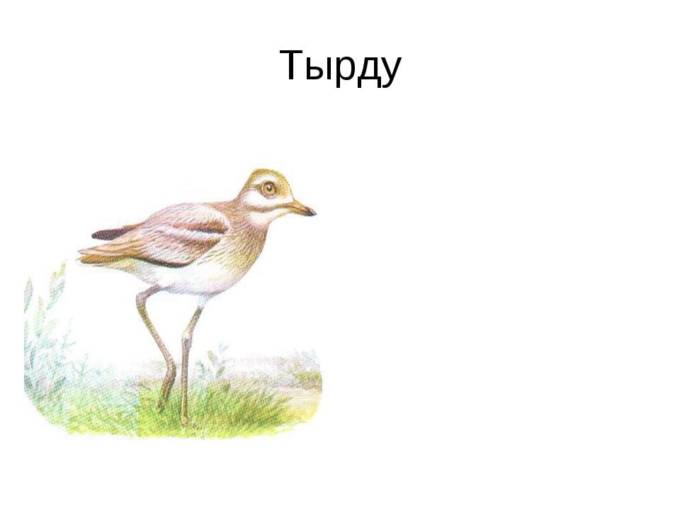 Тырду