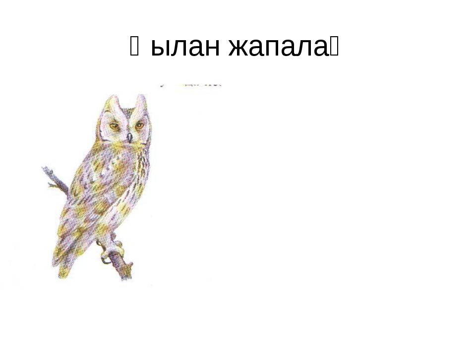 Қылан жапалақ