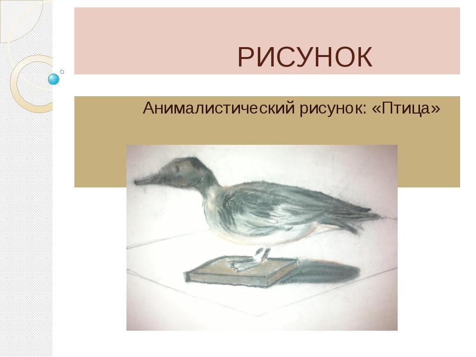 РИСУНОК Анималистический рисунок: «Птица»