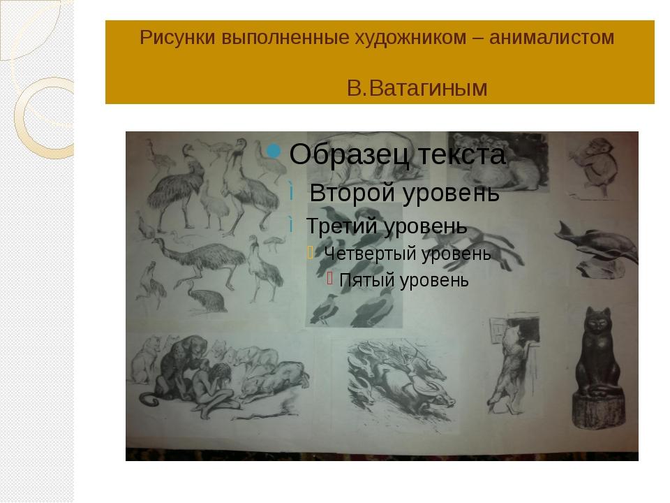 Рисунки выполненные художником – анималистом В.Ватагиным