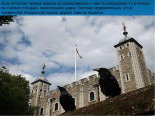 Если в России черные вороны ассоциировались с чем-то нехорошим, то в Англии и