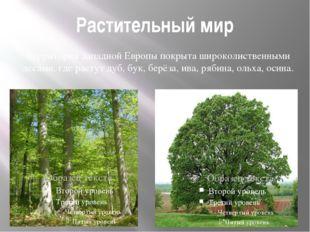 Растительный мир Территория Западной Европы покрыта широколиственными лесами,