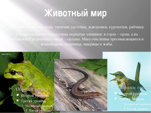 Животный мир Довольно богат мир птиц: типичны ласточки, жаворонки, куропатки,...